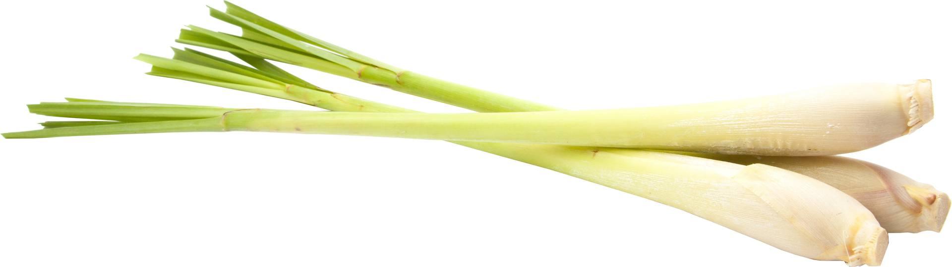 Biologische Ekoplaza Bosje citroengras 1 bosje
