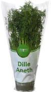Dille op grote pot