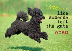 Live... like some left the gate open