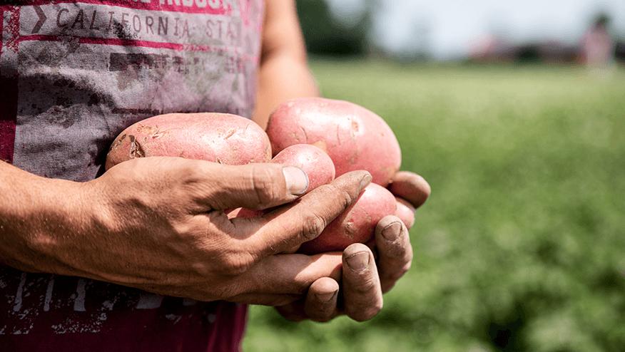 Aardappelteler Sijbrand Westra